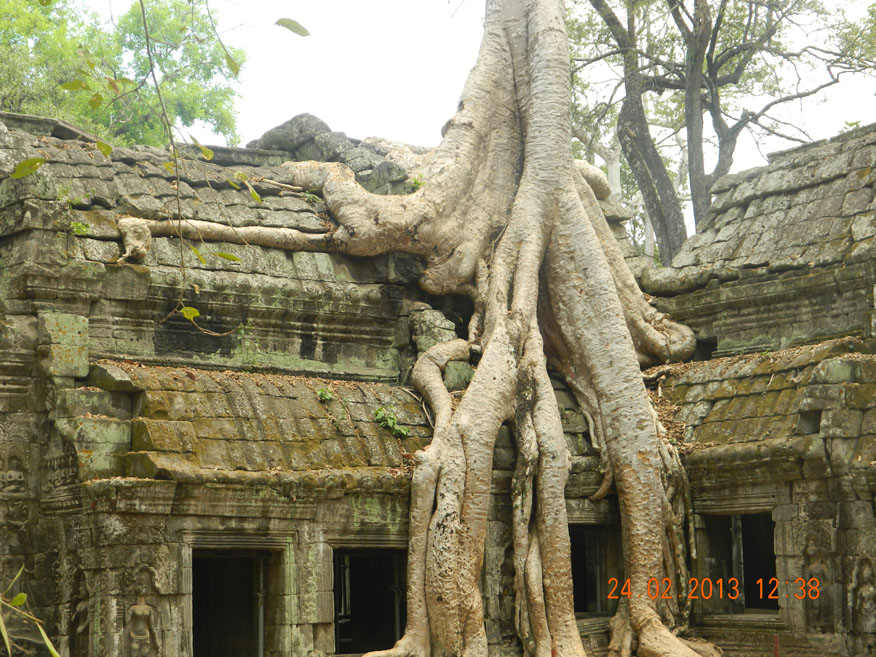Forest encroachment at Wat Ta Phrom, Angkor Wat Historical Park, Cambodia