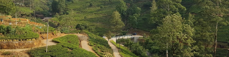 Damro Labookellie Tea Lounge/Factory, North Punduloya, Nuwara Eliya District, Central Region